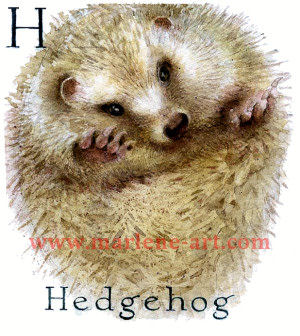 H - the eighth letter in the Animal Alphabet - is for Hedgehog