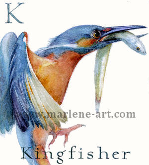 K - the 11th letter in the Animal Alphabet-is for Kingfisher