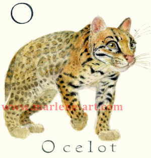 O - the 15th letter in the Animal Alphabet-is for Ocelot