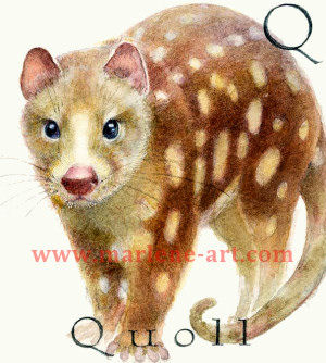 Q - the 17th letter in the Animal Alphabet-is for Quoll