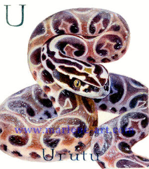U - the 21st  letter in the Animal Alphabet-is for Uruth